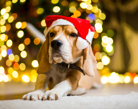 Your Holiday Pet-Safety Checklist
